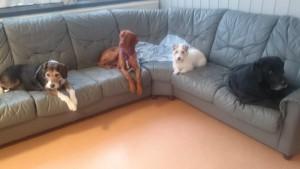 hunddagisets hundar
