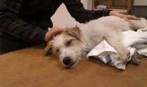 Hundmassage Ludvika