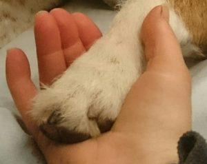 hundtass i hand