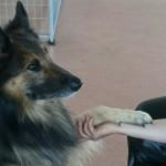 hundträning beteendeutredning